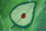 Marienkäfer auf Blatt basteln